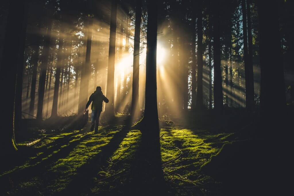 Man Walking Through the Trees into the Light